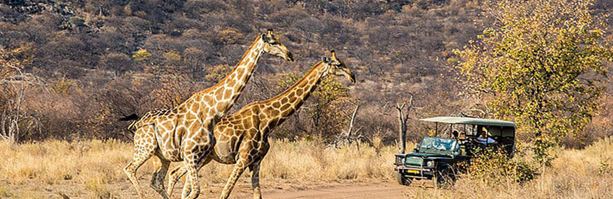 ongava tented camp safari