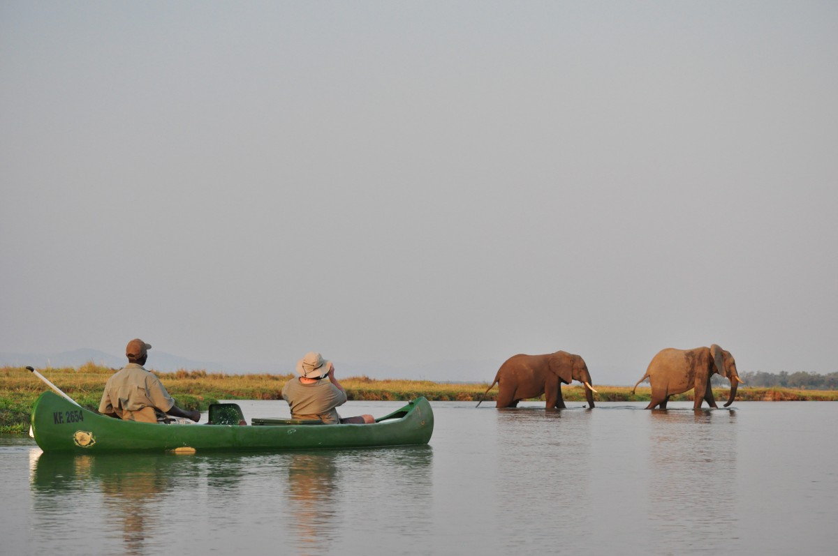 Canoe sur le Zambeze Mana Pools Elephants Zimbabwe