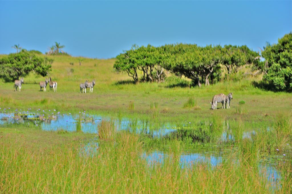 Isimangaliso- South Africa